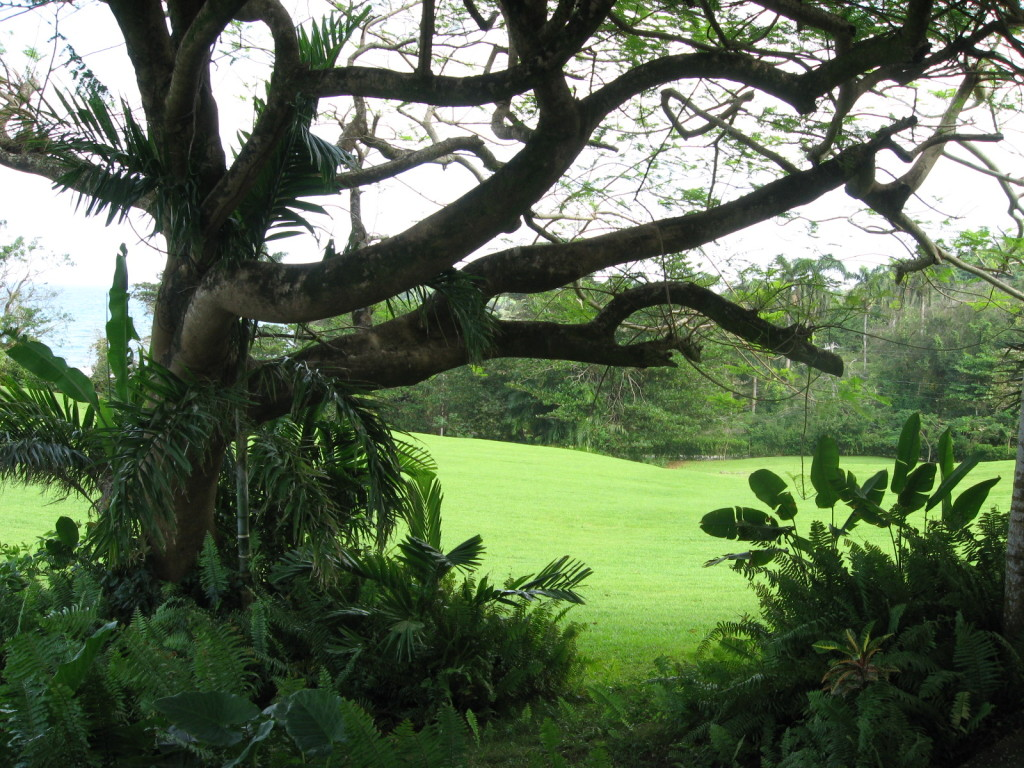 Lush foliage at Goblin HIll Villas at San San in Port Antonio, Jamaica