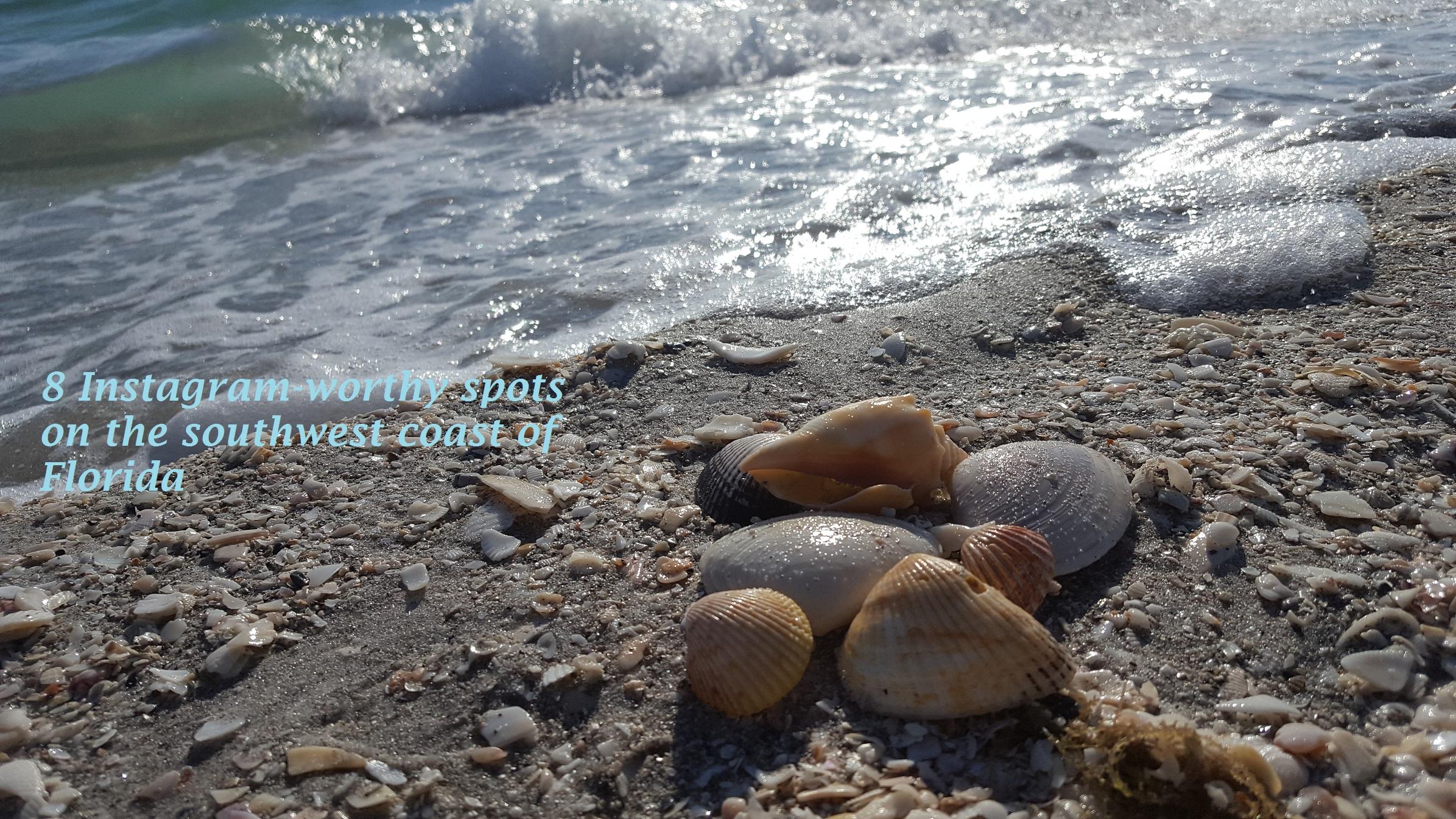 shelling-Captiva island