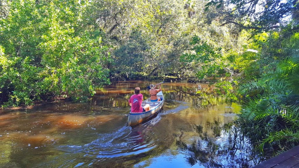 Kayakers paddling down the Estero River