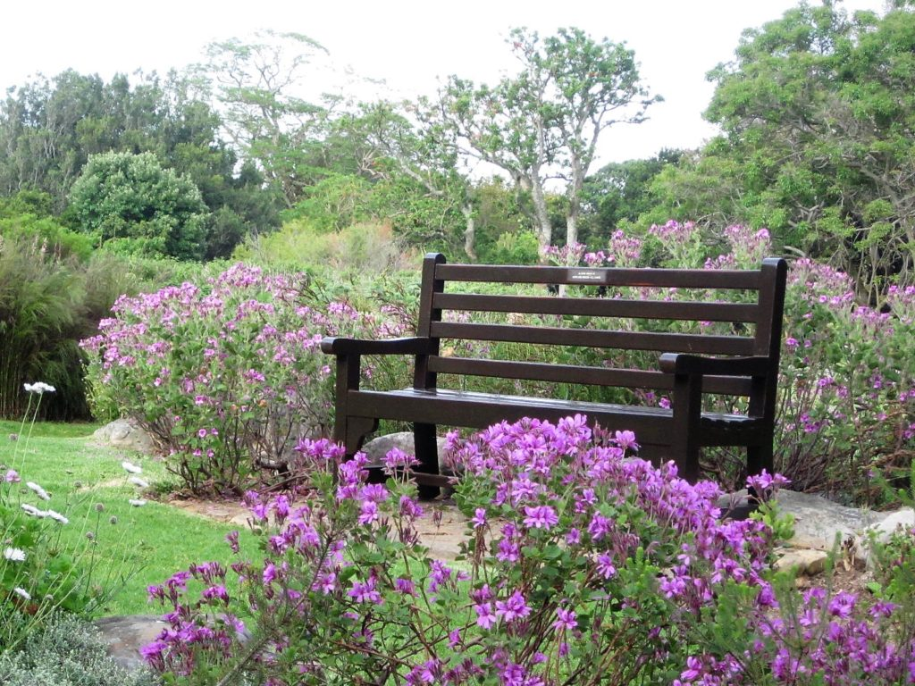 Garden bench at Kirstenbosch Botanical Gardens